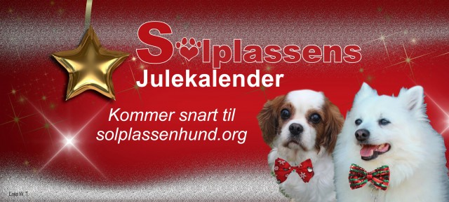 julekalender-2016-header-arrangement